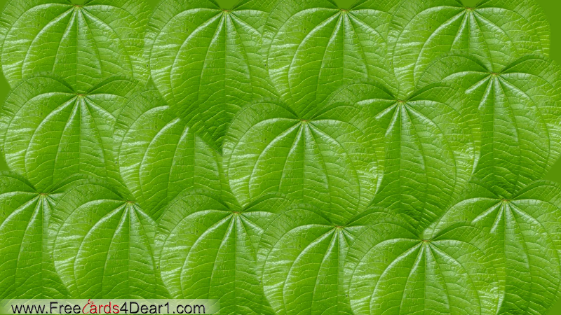 Background of PAN Leaves