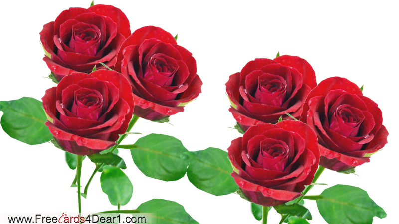 Send This Roses To Your Dear One