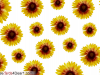 Greet Someone With SunFlower