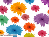 Multicolours Flowers Background