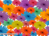 Beutiful Multicolor Flowers
