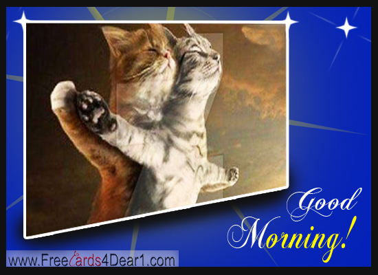 funny-good-morning-cat-images